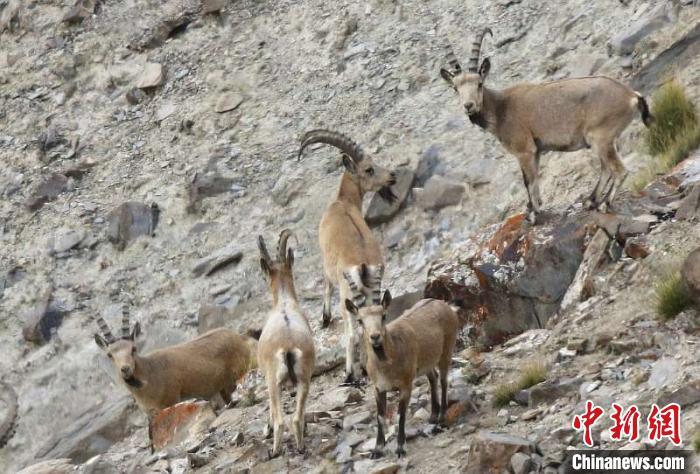 多措并举加大生态环境保护和治理力度 新疆帕米尔高原生态环境改善