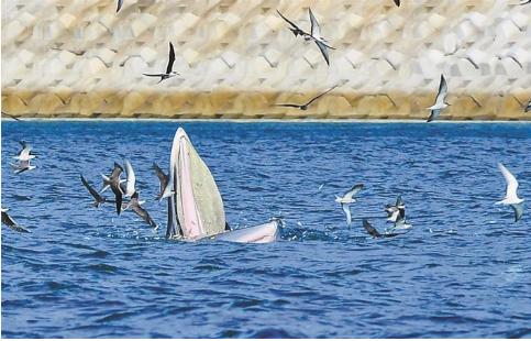 """推动部分海域禁渔 从""""鲸悲""""到""""鲸喜""""深圳社会各界呼吁推动禁渔"""