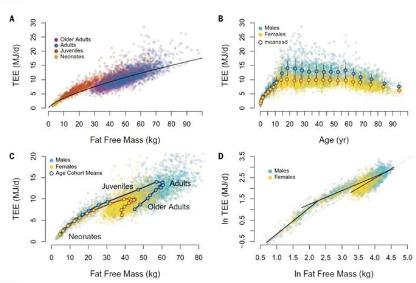 """中年易发福并非代谢低 人体代谢率""""分水岭""""在60岁"""