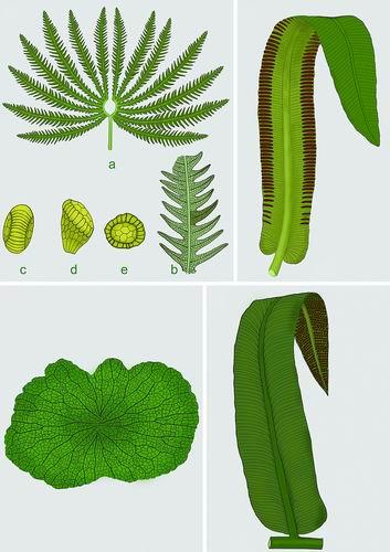 三叠纪末大灭绝事件和真蕨植物群落之间有什么关联?